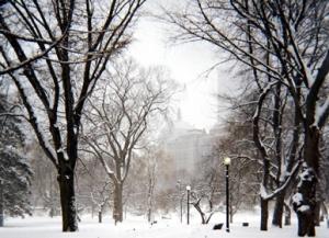 Boston Public Gardens, winter 2005